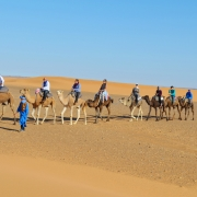 Moroccan Best Camel Tours