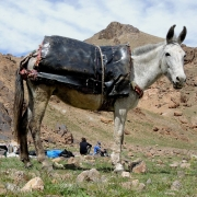 alking and Camping the Atlas Mountains